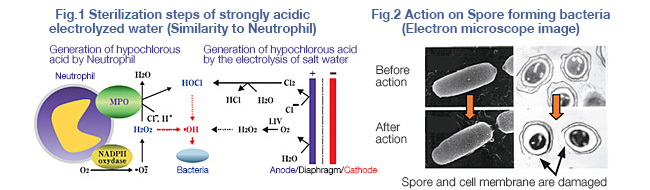 "Basic Knowledge of ""DENKAISUI"" Electrolyzed Water